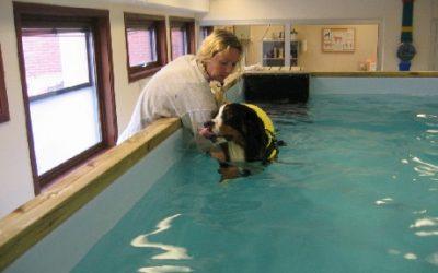 Intervju av en hundefysioterapeut og hundemassør