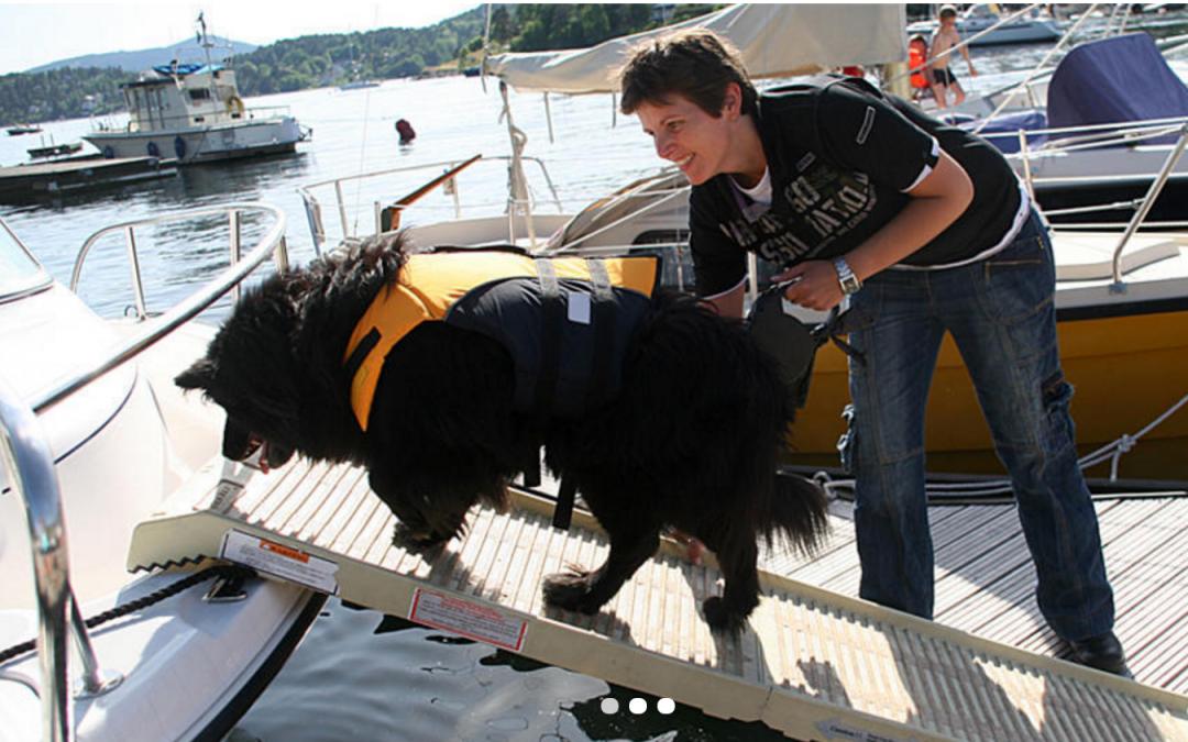 Forenkler hundelivet til sjøs
