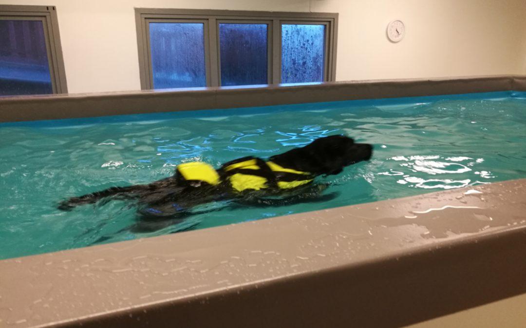 Kurs i hundemassasje og treningsøvelser egen hund
